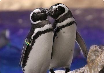 【スカイツリー】すみだ水族館見どころ5選!料金・予約・アクセス・営業時間を徹底解説!
