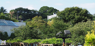 【上野動物園】シャンシャンの成長記!生まれたのはいつ?現在の混雑まとめ!