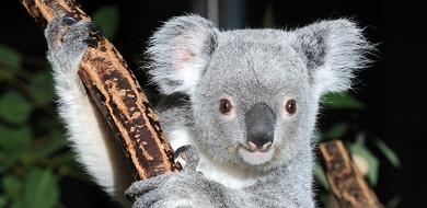 【2019】多摩動物公園のランチ!コアラ弁当・ランチセットおすすめレストラン解説!お弁当の持ち込みは?