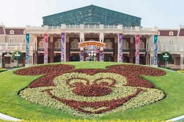 ディズニーリゾートの花・植栽の秘密に迫る!その種類6000種、50年に一度しか咲かない花も!