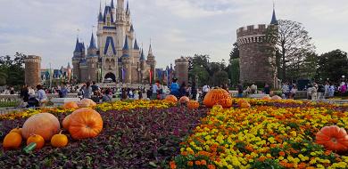 【2019秋】9月のディズニーの服装まとめ!気温&天気別のおすすめは?コーデ例や持ち物も!