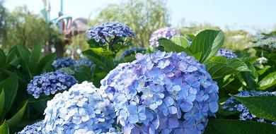 【2020春】6月のディズニーの服装まとめ!おすすめのアイテム&コーデ例!ディズニーバウンドも!