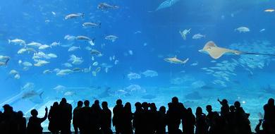 【GoToトラベル】美ら海水族館を安く予約するには?ホテルセットプランや日帰りツアーがおすすめ!
