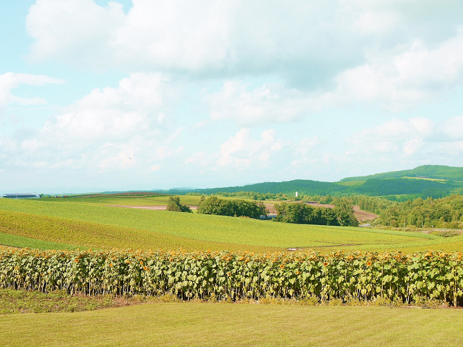 【北海道】美瑛のおすすめ観光スポット13選!ヨーロッパのような町並みを散策しよう