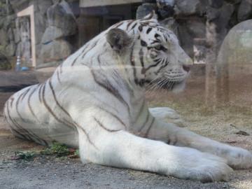 【2018夏】東武動物公園の年間イベントまとめ!期間限定「進撃の巨人」コラボ、ナイトサファリ、花火も
