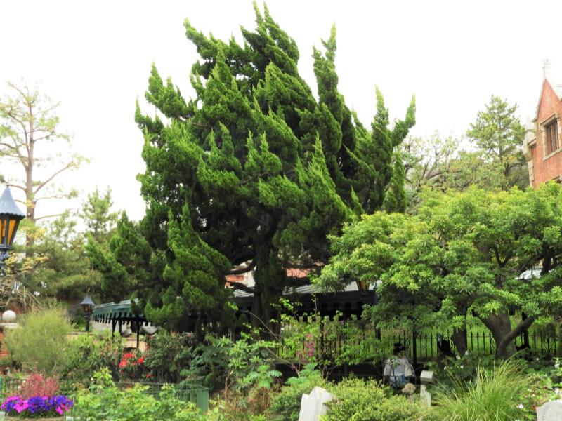 中央の木に注目