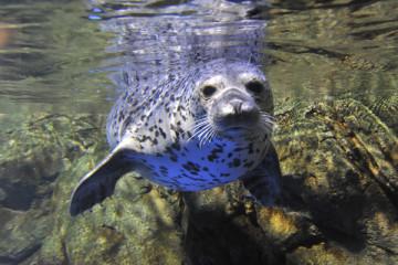 【新江ノ島水族館】おすすめ周辺ランチ特集!海鮮丼・しらす・オーシャンビューのレストランも