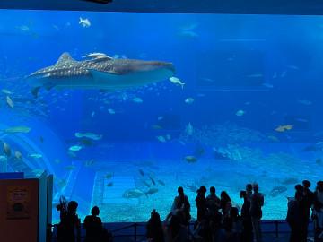 【2020】美ら海水族館の割引方法7選!道の駅、コンビニ、空港、レンタカーとのセット、最安はどれ?