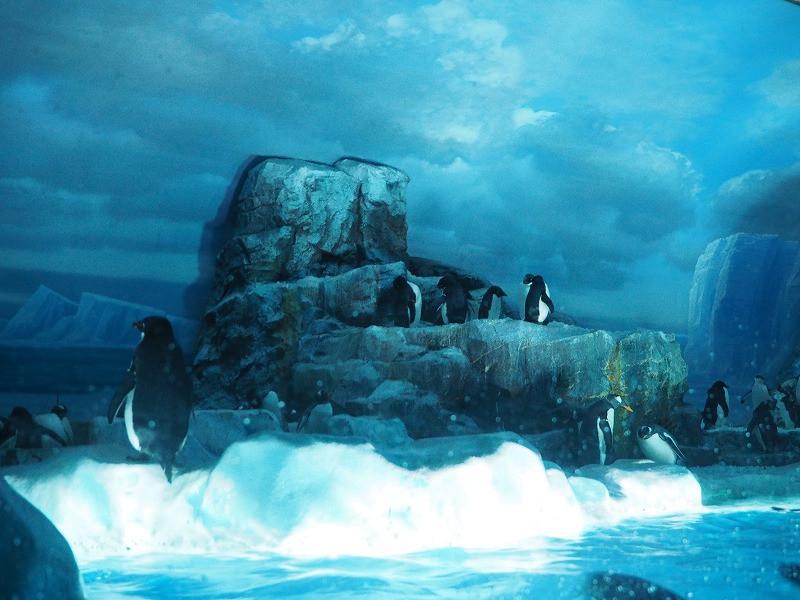 名古屋港水族館のペンギンたち
