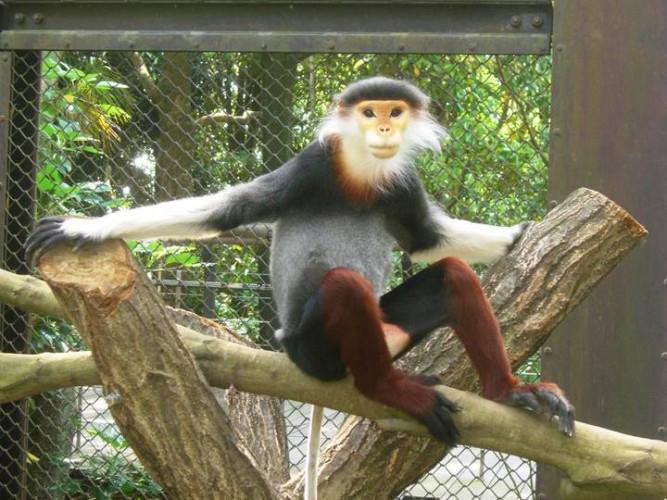 【2019】よこはま動物園ズーラシア完全ガイド!料金&8つのエリアまとめ!ズーラシアの魅力を徹底解説!