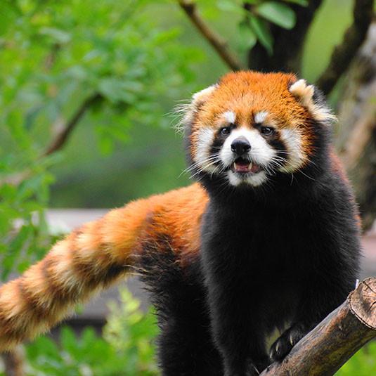 天王寺動物園:【おすすめ⑥】夜の動物が観察できるナイトズー