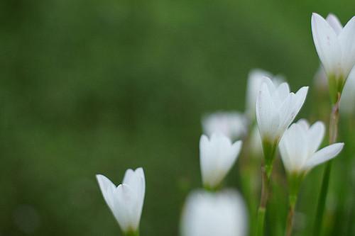 ぽつんと咲いた花の秘密
