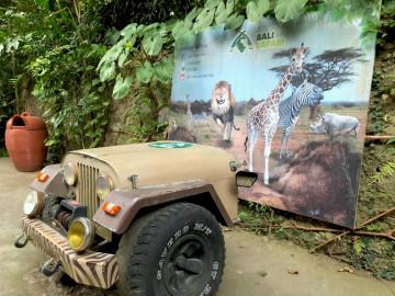 【体験談】バリ島のナイトサファリにツアーで参加!内容、食事、お土産、ライオンの餌やりも♪